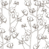 Seamless pattern with cotton branches. Vector vintage background Royalty Free Stock Photography