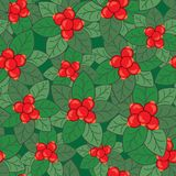 Seamless pattern with cranberry bushes. Seamless pattern with cranberry bushes on dark green background Stock Photo