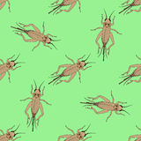 Seamless pattern with cricket or grig. Gryllus campestris.    hand-drawn cricket. grig.  Royalty Free Stock Images