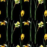 Seamless pattern with crocus, gerber and narcissus flowers royalty free stock photography