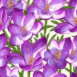 Seamless pattern with crocuses. Stock Images