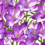Seamless pattern with crocuses. Royalty Free Stock Photos