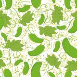 Seamless pattern, cucumbers Stock Photos