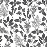 Seamless pattern with culinary herbs and spices. Black and white Royalty Free Stock Photography