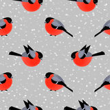 Seamless pattern with cute bullfinches in winter Stock Images