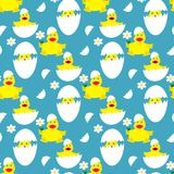 Seamless pattern with cute chickens in the egg. Royalty Free Stock Photography