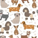 Seamless pattern with cute dogs. Vector texture with funny cartoon characters Stock Photography