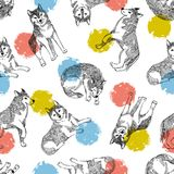 Seamless pattern with cute husky and colorful circles. Vector animal background. Funny design for kids . vector illustration