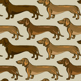 Seamless pattern of Dachshund dogs Royalty Free Stock Photography