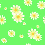 Seamless pattern of daisies Royalty Free Stock Photo