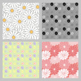 Seamless pattern of daisies. Royalty Free Stock Images