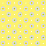 Seamless pattern. Daisies. Stock Photography