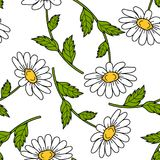 Seamless pattern with daisy flowers. Seamless pattern with daisies on white background. Vector illustration Stock Image