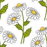Seamless pattern with daisy flowers Stock Photography