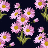 Seamless pattern with daisy flowers. Seamless pattern with pink daisies on dark background. Vector illustration Stock Photos