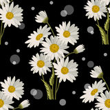 Seamless pattern with daisy flowers. Seamless pattern with white daisies and circles on black background. Vector illustration Stock Photos