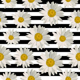 Seamless pattern with daisy flowers Royalty Free Stock Photos