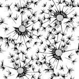 Seamless pattern of dandelion . Hand-drawn floral background. Bl Royalty Free Stock Photography