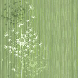 Seamless pattern of dandelion . Hand-drawn floral background,  v Stock Images