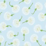 Seamless pattern with dandelions Royalty Free Stock Images