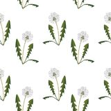 Seamless pattern with dandelions. On simple background. Flat design. Vector Illustration Stock Photos