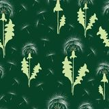 Seamless pattern of the dandelions with their seeds. Vector background of the ripe dandelions Royalty Free Stock Images
