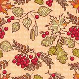 Seamless pattern. Deciduous. Autumn leaf ornament. Forrest leafy. Background. Rowan. Maple. Birch. Oak. Vector illustration Royalty Free Stock Photography