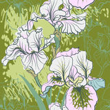 Seamless pattern with decorative  iris flower in retro colors. Royalty Free Stock Image