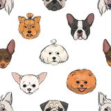 Seamless pattern with decorative, thoroughbred dogs. head, muzzle on white. hand drawn realistic colorful background. Seamless pattern with decorative Stock Photography