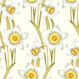Flower seamless pattern with daffodils. Royalty Free Stock Images