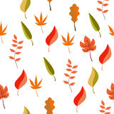 Seamless pattern of different autumn leaves. Seamless pattern for any design Stock Photo