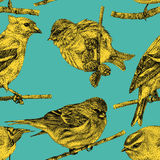 Seamless pattern with different birds drawn by hand Stock Photography