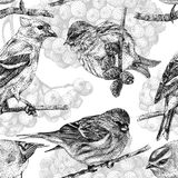 Seamless pattern with different birds and plants drawn by hand Royalty Free Stock Photography