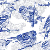 Seamless pattern with different birds and plants drawn by hand Stock Photos