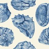Seamless pattern with different seashells drawn by hand Stock Images