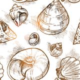 Seamless pattern from of different shapes shell  sketches 2. Vector Royalty Free Stock Image