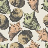 Seamless pattern with different shells Stock Photos