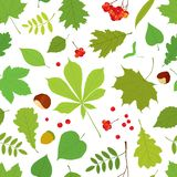 Seamless pattern of different tree leaves Royalty Free Stock Photo