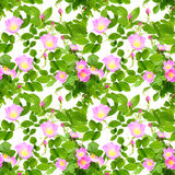Seamless pattern of dog-roses flowers Stock Images