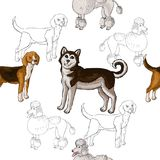 Seamless pattern with dogs. Hand drawn dogs. Sketches.Vector illustration Stock Photo