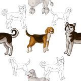 Seamless pattern with dogs. Hand drawn dogs. Sketches.Vector illustration Royalty Free Stock Images