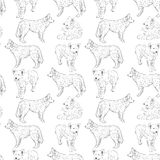 Seamless pattern with dogs. Shepherd. Sketch drawing. Black contour on a white background.  Royalty Free Stock Image