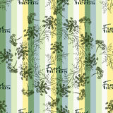 Seamless pattern drawing dill or fennel and text. Seamless pattern with drawing vintage dill or fennel and text - fresh herbs on the green striped background Royalty Free Stock Photos