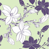 Seamless pattern with drawing magnolia flowers Stock Photos