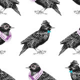 Seamless pattern with dressed up starling Royalty Free Stock Photo