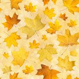Seamless pattern with dry autumn leaves. Background of maple orange pressed leaves. Royalty Free Stock Photos