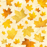 Seamless pattern with dry autumn leaves. Background of maple orange pressed leaves. Stock Photos