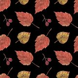 Seamless pattern, dry leaves and berries on black stock illustration
