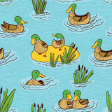 Seamless pattern with ducks and reed on water Stock Photos