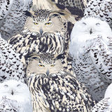 Seamless pattern of eagle owl and polar owl Stock Photos